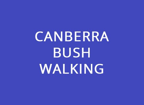 Canberra Bush Walking - Zealous Portfolio